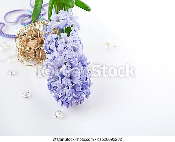 Blue Hyacinth isolated on white background - csp26692232