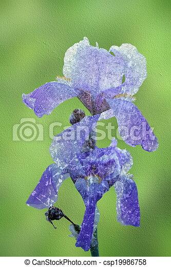 blue iris abstract view - csp19986758