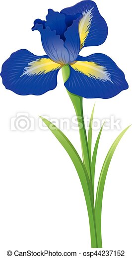 blue iris flower on white background illustration clipart vector rh canstockphoto com irish clip art free images irs clip art