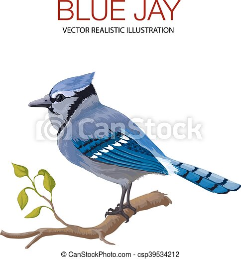 blue jay vector illustration made in a realistic style vector clip rh canstockphoto com blue jays baseball clipart baby blue jay clipart