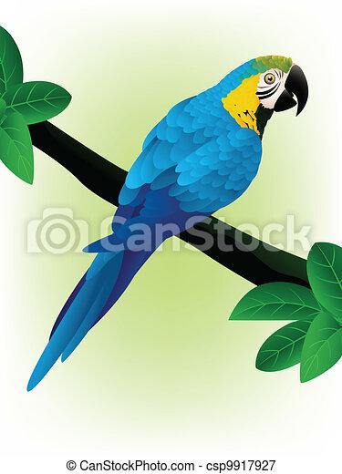 Blue Macaw - csp9917927