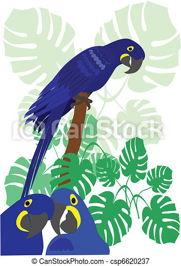 Blue Macaw Parrot Vector - csp6620237