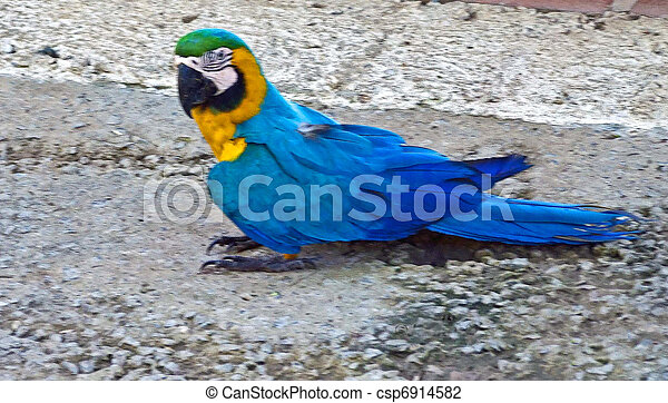 Blue Macow. His Home is Costa Rica - csp6914582