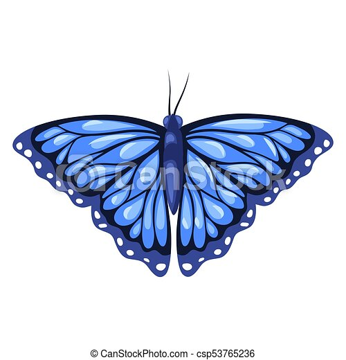 Blue monarch butterfly isolated on white background - csp53765236