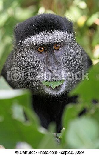 blue monkey - csp2050029