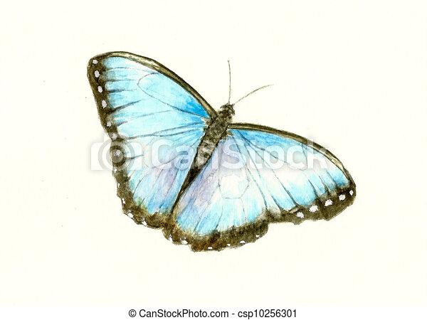 Blue Morpho Butterfly - csp10256301