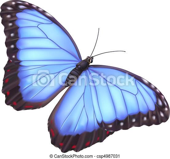 Blue morpho butterfly - csp4987031
