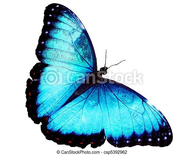 Blue Morpho - csp5392962