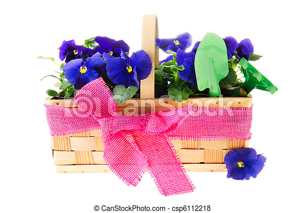 Blue pansy flowers in basket with pink ribbon blue pansy flowers csp6112218 mightylinksfo