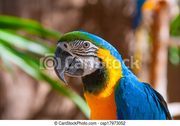 Blue Parrot portrait with yellow neck - csp17973052