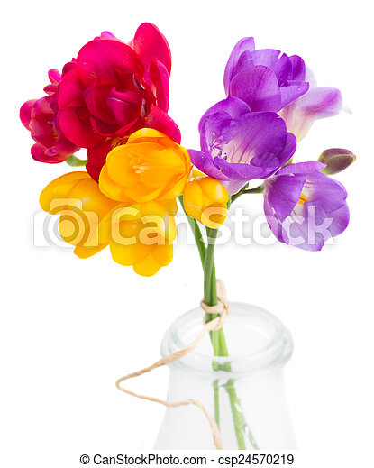 Blue pink and yellow freesia flowers blue pink and yellow blue pink and yellow freesia flowers csp24570219 mightylinksfo