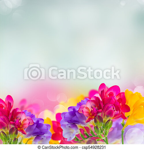 Blue pink and yellow freesia flowers border on blue bokeh background blue pink and yellow freesia flowers csp54928231 mightylinksfo