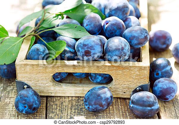 blue plums - csp29792893