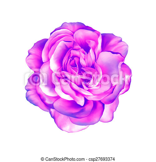 Blue Purple Rose Flower Isolated On White