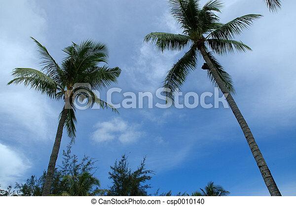 blue skies 3 - csp0010140