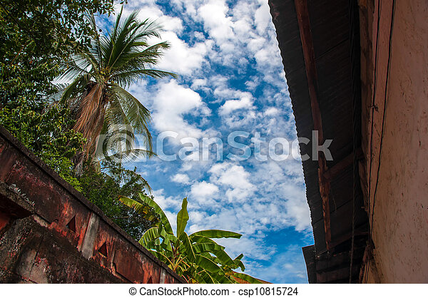 Blue Sky and Palm Trees - csp10815724
