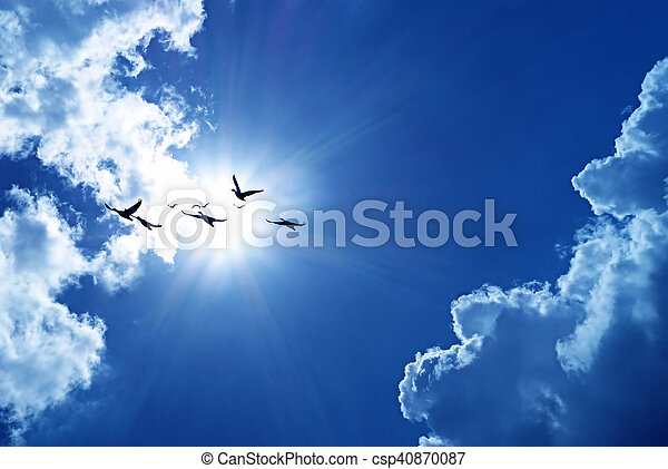 Blue sky with flying birds natural background - csp40870087