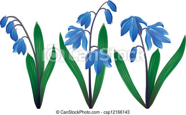 Blue snowdrops - csp12166143
