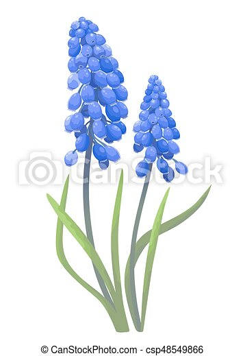 Blue spring flowers on a white background clip art vector search blue spring flowers csp48549866 mightylinksfo Gallery