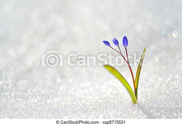 blue spring flowers - csp8715531