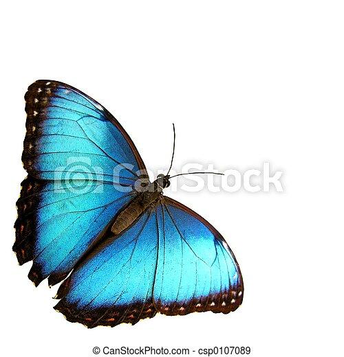Blue - csp0107089