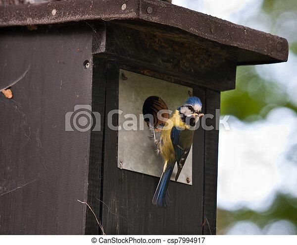Blue tit at a birdhouse - csp7994917