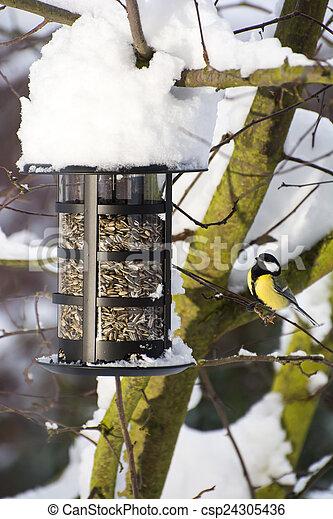 Blue Tit at the Bird Feeder - csp24305436