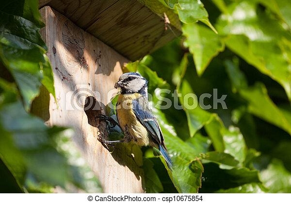 Blue tit by a nesting box - csp10675854