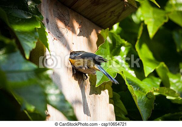 Blue tit by a nesting box - csp10654721