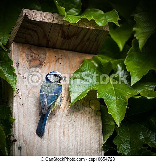 Blue tit by a nesting box - csp10654723