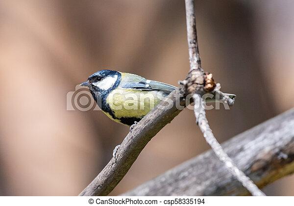 Blue tit on a branch. Close-up. - csp58335194