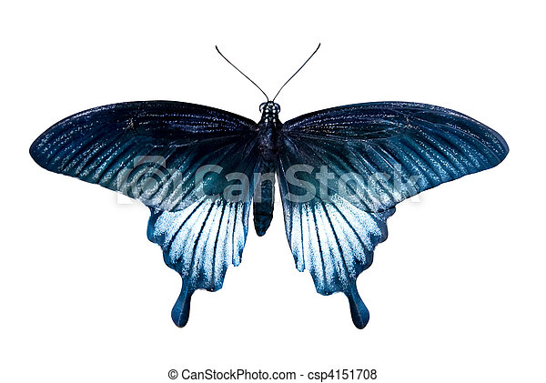 blue tropical butterfly isolated on white - csp4151708