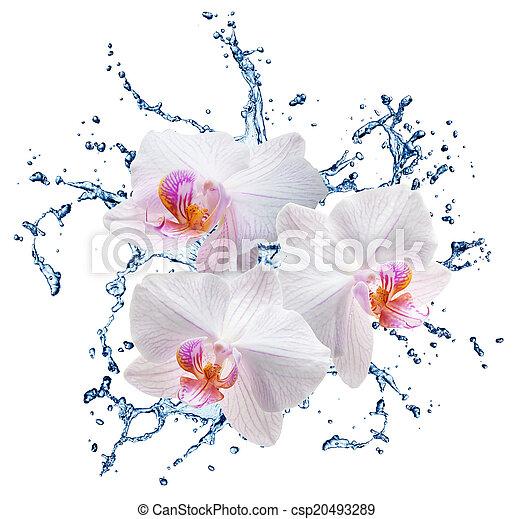 blue water splash isolated - csp20493289