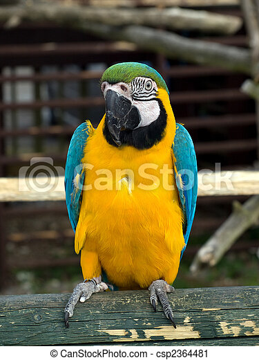 blue yellow and green parrot standing on abranch
