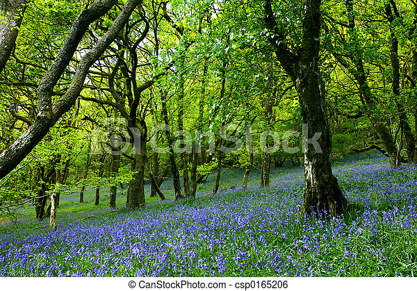 Bluebell Fairyland - csp0165206