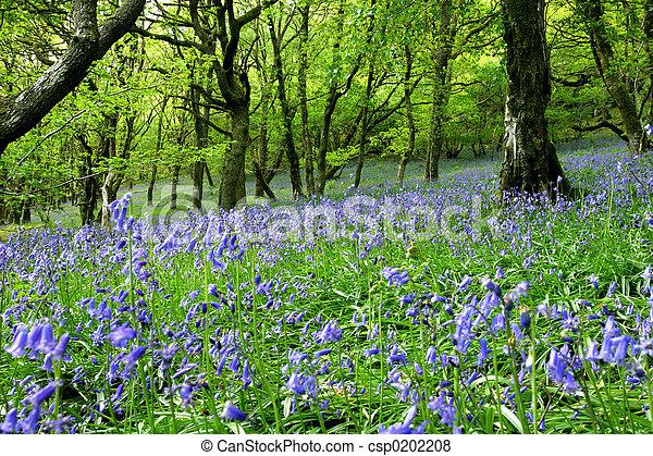Bluebell Fantasy Land - csp0202208