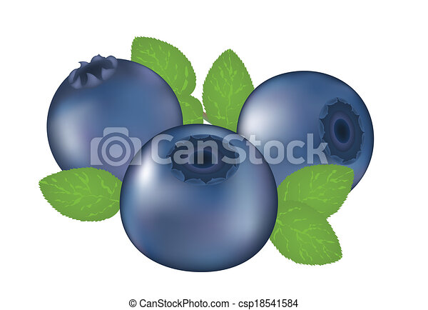 blueberry illustrations and stock art 8 280 blueberry illustration rh canstockphoto com blueberry clipart free clipart blueberry muffin