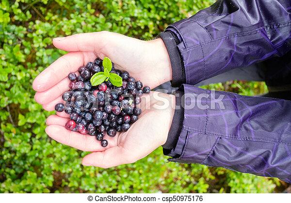 Blueberry in girl hands - csp50975176
