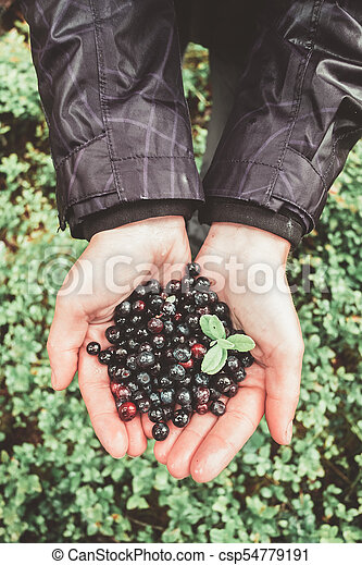 Blueberry in girl hands - csp54779191
