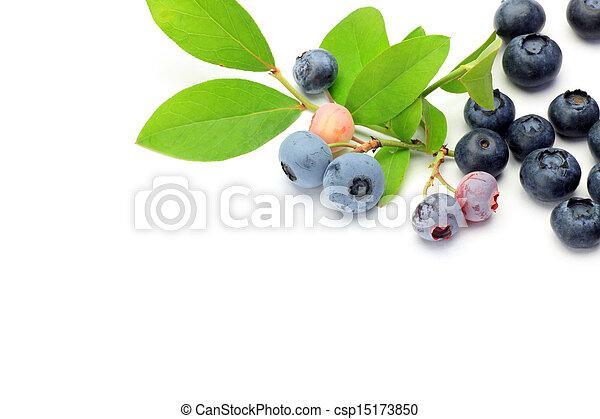 blueberry - csp15173850