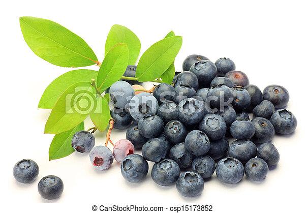 blueberry - csp15173852