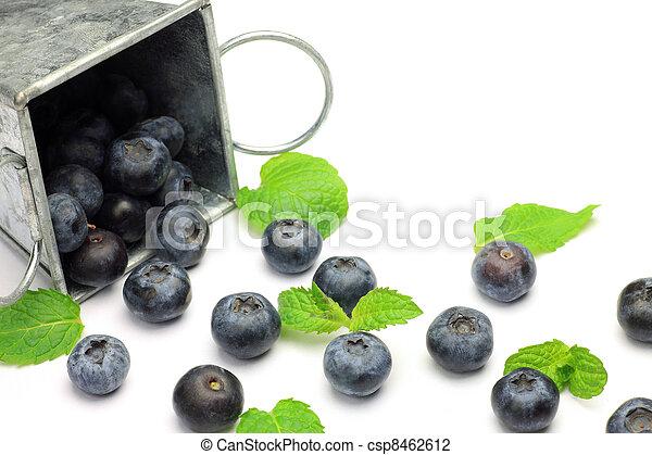 blueberry - csp8462612