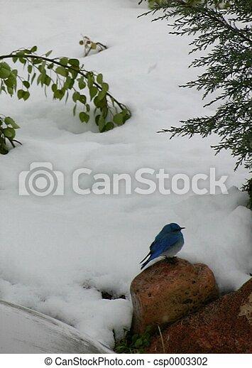 Bluebird 4814 - csp0003302