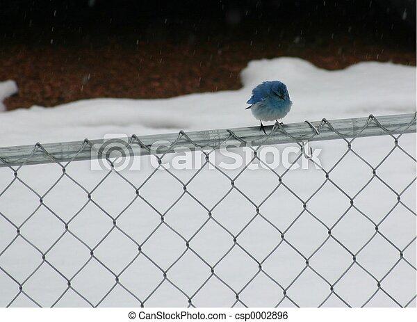 Bluebird 4820 - csp0002896
