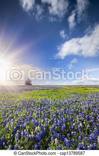 Campos azules en Palmer, TX - csp13789587