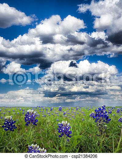 Campos Bluebonnet en Texas - csp21384206