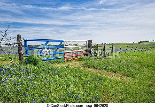 Campo azul de Texas y cerca en primavera - csp19642620