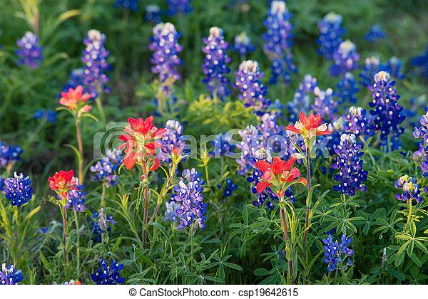 Texas bluebonnet e India pinceles silvestres - csp19642615