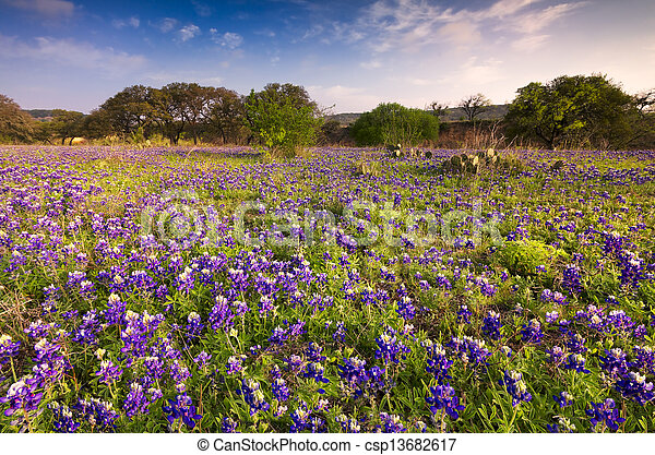 Bluebonnets in the Texas Hill Country - csp13682617