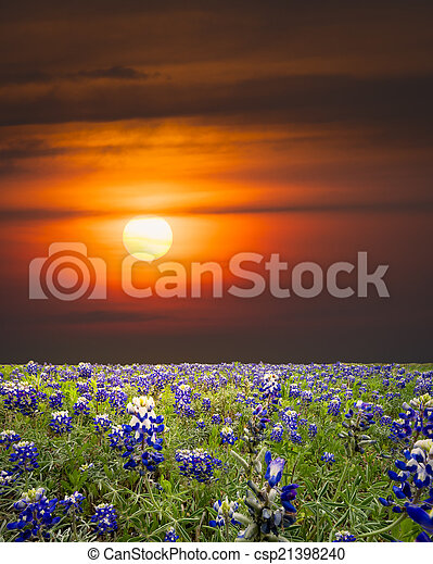 Bluebonnets in the Texas Hill Country - csp21398240